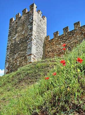 Photograph - Roman Walls And Flowers In Tarragona by Eduardo Jose Accorinti