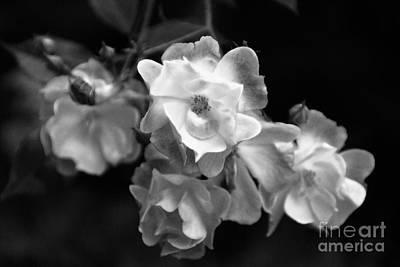 Photograph - Romance Bw by Linda Shafer