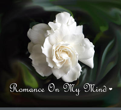 Romance Rose Art Print by Kim