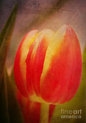 Flowers Photograph - Romance Tulip by Angela Doelling AD DESIGN Photo and PhotoArt
