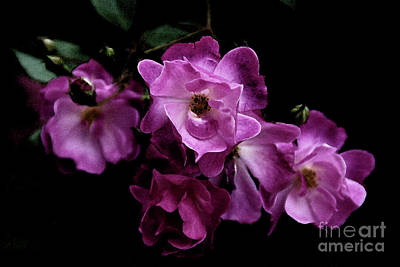 Photograph - Romance - Wc by Linda Shafer