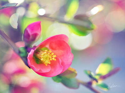 Photograph - Romancing Spring I by Kharisma Sommers