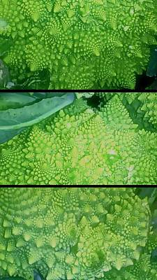 Photograph - Romanesco by Karl Reid