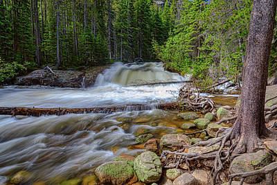 Photograph - Romantic Forest Stream by James BO Insogna