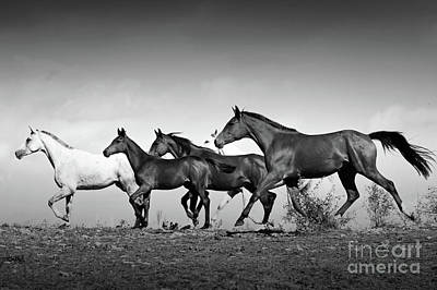 Photograph - Romantic Horses Black And White by Dimitar Hristov
