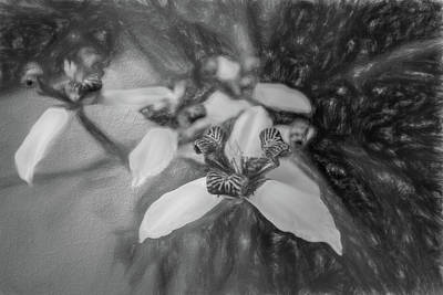 Photograph - Romantic Island Lilies In Black And White by Debra and Dave Vanderlaan