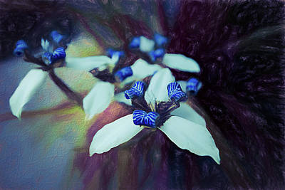Photograph - Romantic Island Lilies In Blues by Debra and Dave Vanderlaan