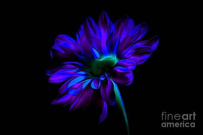 Bouquet Black Background Photograph - Romantic Nights by Krissy Katsimbras