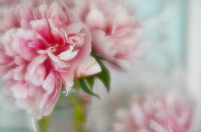 Photograph - Romantic Peonies 1 by Diane Alexander