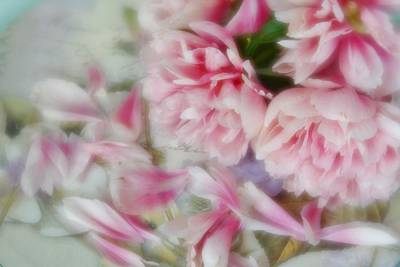 Photograph - Romantic Peonies 3 by Diane Alexander