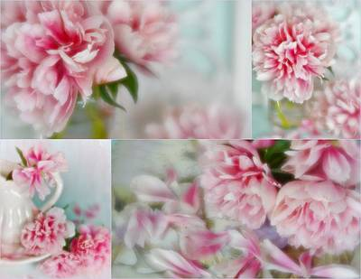 Photograph - Romantic Peonies Collage by Diane Alexander