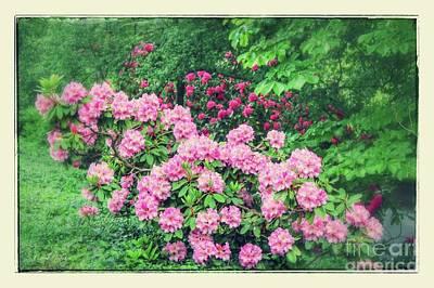 Romantic Rhododendrons Art Print by Carol Groenen