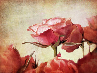 Photograph - Romantic Roses by Jessica Jenney