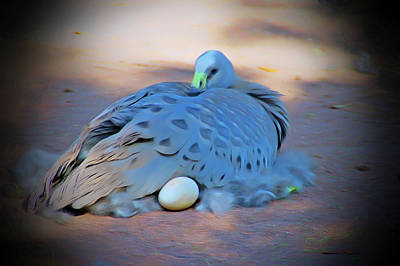 Photograph - Romantic Skies Bird Laying Egg by Aimee L Maher Photography and Art Visit ALMGallerydotcom