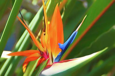 Vivid Photograph - Romantic Skies Bird Of Paradise by Aimee L Maher Photography and Art Visit ALMGallerydotcom