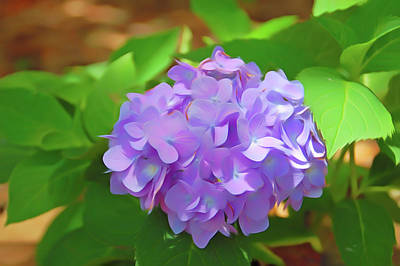 Photograph - Romantic Skies Hydrangea by Aimee L Maher Photography and Art Visit ALMGallerydotcom