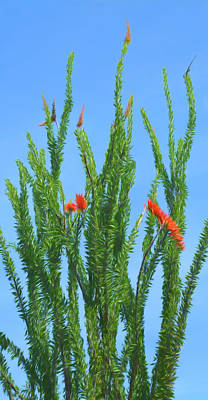 Photograph - Romantic Skies Ocotillo Plant by Aimee L Maher Photography and Art Visit ALMGallerydotcom