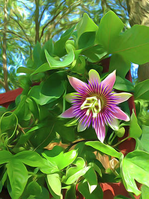 Photograph - Romantic Skies Passion Flower 3 by Aimee L Maher Photography and Art Visit ALMGallerydotcom