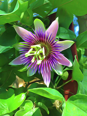 Photograph - Romantic Skies Passion Flower 4 by Aimee L Maher Photography and Art Visit ALMGallerydotcom