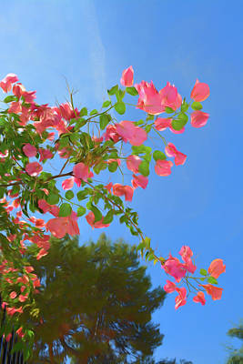 Pastels Photograph - Romantic Skies Pink Bougainvillea by Aimee L Maher Photography and Art Visit ALMGallerydotcom
