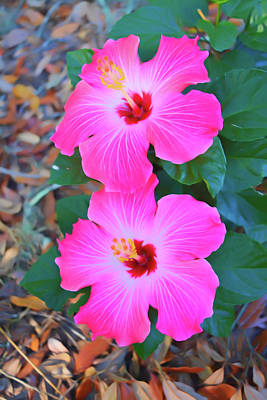 Photograph - Romantic Skies Pink Hibiscus Blooms Vertical by Aimee L Maher Photography and Art Visit ALMGallerydotcom