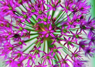 Photograph - Romantic Skies Purple Starlight by Aimee L Maher Photography and Art Visit ALMGallerydotcom