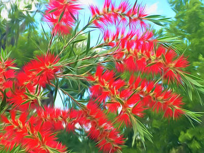 Photograph - Romantic Skies Red Bottlebrush by Aimee L Maher Photography and Art Visit ALMGallerydotcom