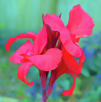 Photograph - Romantic Skies Red Canna Lily Floral by Aimee L Maher Photography and Art Visit ALMGallerydotcom