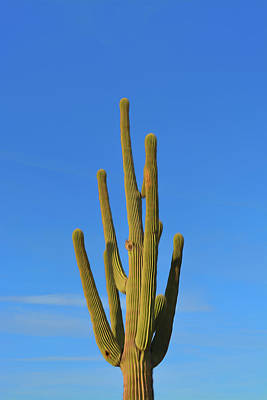 Photograph - Romantic Skies Saguaro Cactus by Aimee L Maher ALM GALLERY