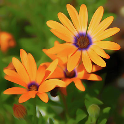 Purple Photograph - Romantic Slies Orange Daisy by Aimee L Maher Photography and Art Visit ALMGallerydotcom
