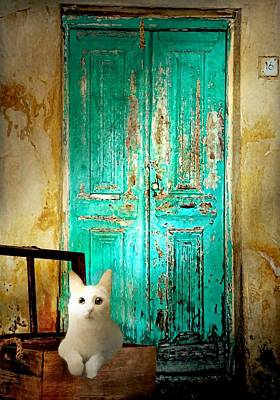 Photograph - Rome Street Cat by Diana Angstadt