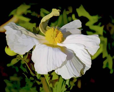 Photograph - Romneya Flower by Joseph Hollingsworth
