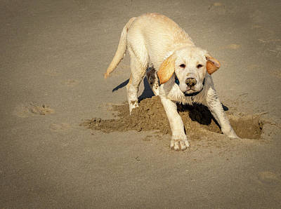 Photograph - Romping Puppy by Jean Noren