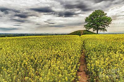 Ronneberga Backar Landscape Art Print by Antony McAulay