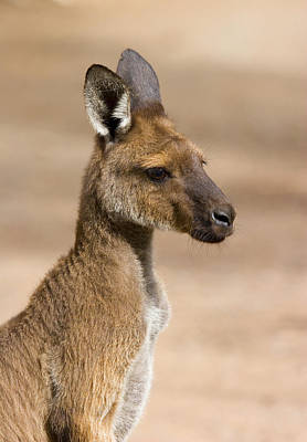 Roo Portrait Art Print by Mike  Dawson