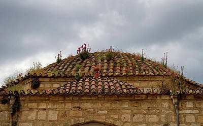 Photograph - Roof Garden by Shirley Mitchell