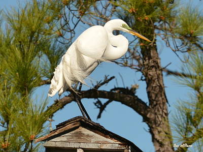 Photograph - Roof-top Perch by Dan Williams