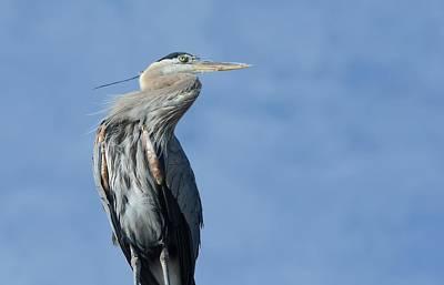 Photograph - Rooftop Heron by Fraida Gutovich