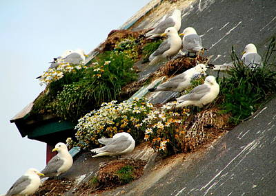 Photograph - Rooftop Nests In Rorvik by Laurel Talabere
