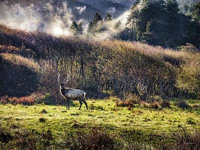 Photograph - Roosevelt Elk by Leland D Howard