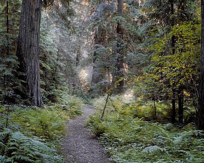 Path Photograph - Roosevelt Grove by Leland D Howard