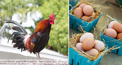 Rooster Photograph - Rooster Eggs by Rebecca Cozart