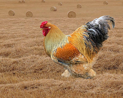 Photograph - Rooster In The Hay Field by Gill Billington