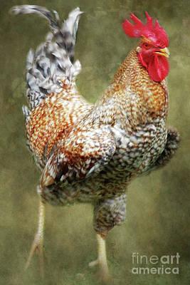Barnyard Digital Art - Rooster Jr. Strut by Anita Faye