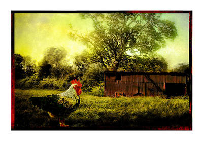 Rooster Photograph - Rooster by Mal Bray