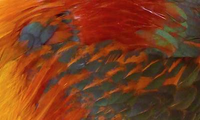 Photograph - Rooster by Pat Exum