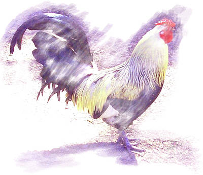 Rooster Purple Original
