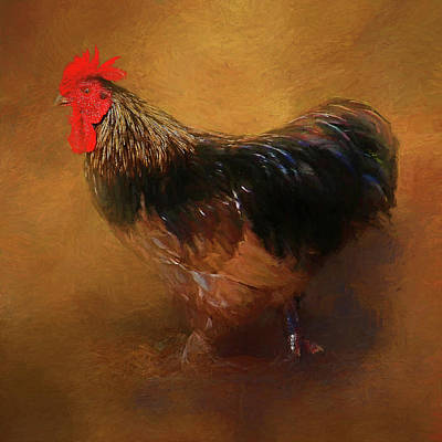 Photograph - Rooster Strut by HH Photography of Florida