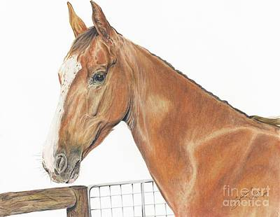 Rooster The American Saddlebred Art Print