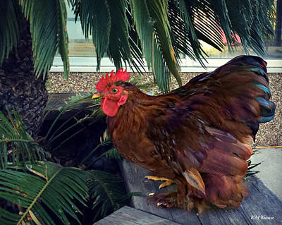 Rooster Under The Palm Print by Kathy M Krause